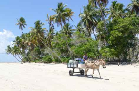 Pas de voitures mais des carrioles tirées par des chevaux sur l'île Boipeba - Brésil -