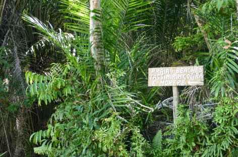 Balade sur les chemins de l'île Boipeba - Brésil -