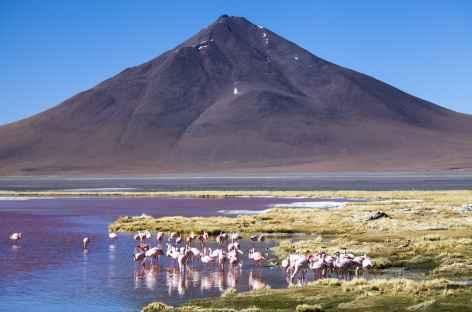 Flamants et volcan - Bolivie -