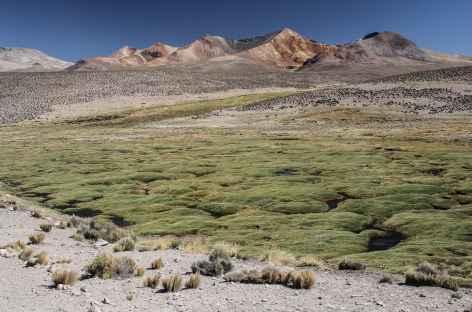 Bofedal et volcans colorés - Chili -