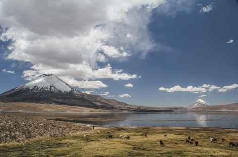 Parinacota et Sajama encadrent le lac Chungara - Chili -