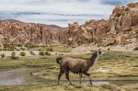Marche dans un canyon - Chili -