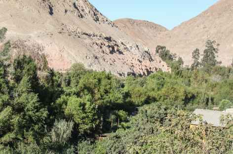Dans le canyon de Codpa - Chili -