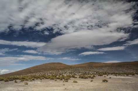 Paysage typique de l'altiplano - Chili -