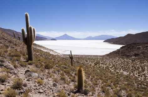 Salar Copeisa - Bolivie -