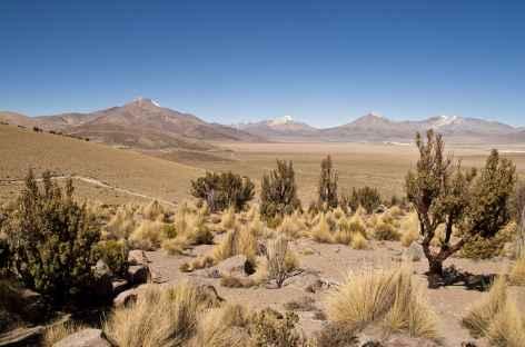 De Putre à Guallatire - Chili -