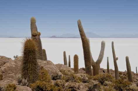 Salar Uyuni Bolivie -