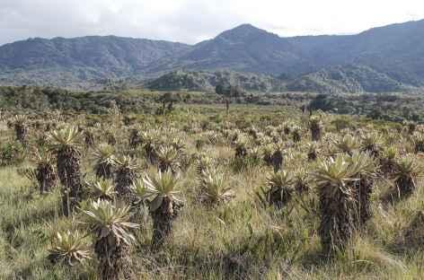 Traversée du paramo au pied du volcan Purace - Colombie -