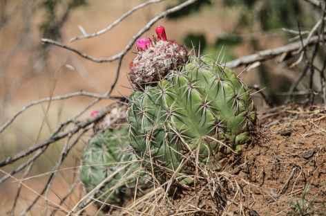 Cactus dans le désert de la Tatacoa - Colombie -