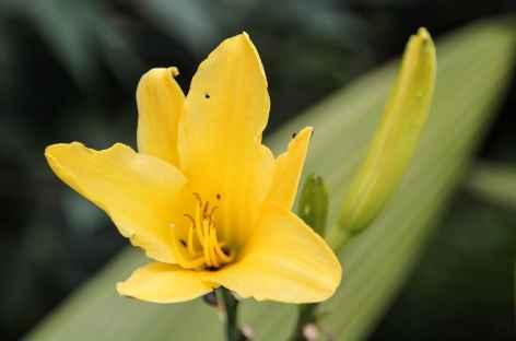 Fleur des tropiques - Colombie -