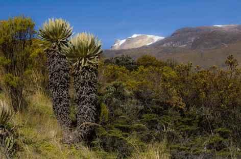 Frailejones et montagnes dans le parc national Los Nevados - Colombie -