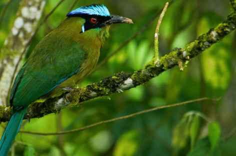 Oiseau dans le parc national Los Nevados - Colombie -