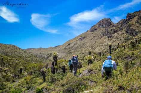 Au milieu des frailejones dans le parc national Los Nevados - Colombie -