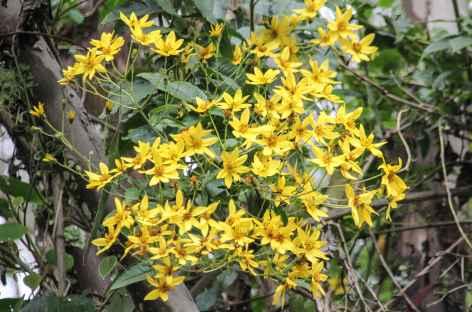 Fleur dans le parc national Los Nevados - Colombie -