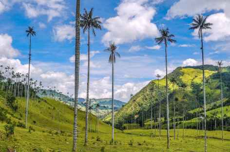 Les palmiers de cire de la vallée de Cocora - Colombie -