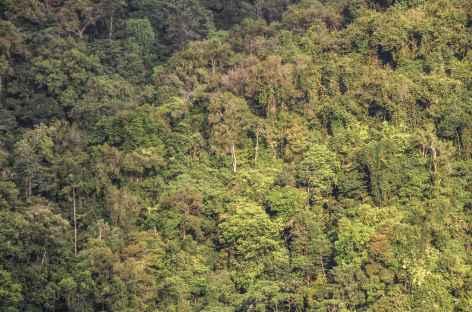 Forêt de la côte Pacifique - Colombie -