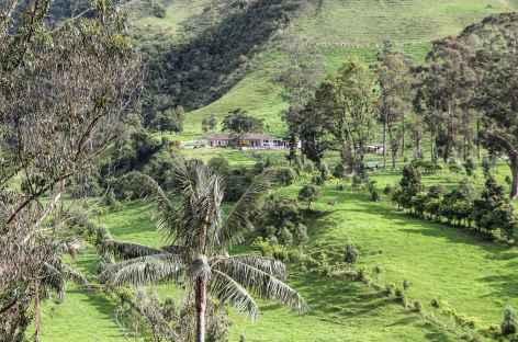 Dans la région du café - Colombie -