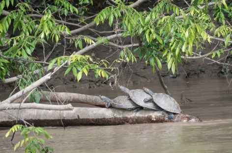 Tortues Cano Cristales -