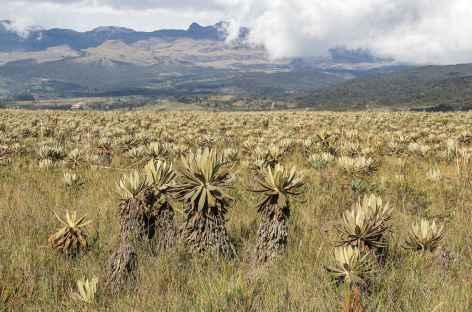 Dans le paramo, au pied du volcan Purace  - Colombie -