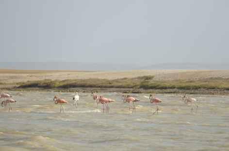 Désert de la Guajira, flamants rose -