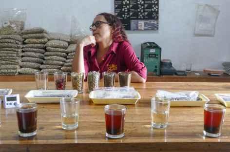 Plantation de café - Colombie -