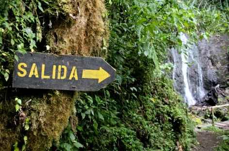Balade dans la forêt de Dota - Costa Rica -