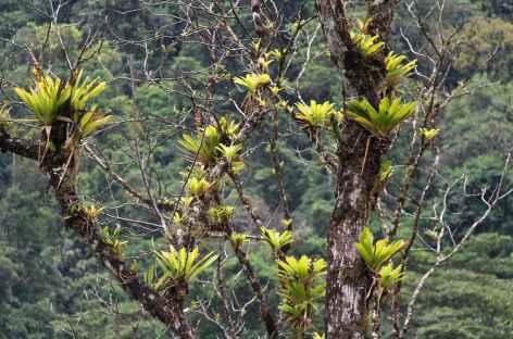 Balade dans la forêt tropicale - Costa Rica -