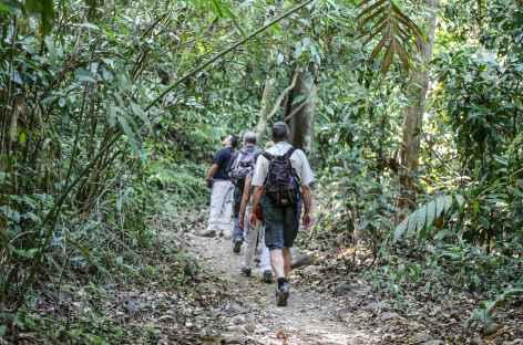 Balade en forêt - Costa Rica -