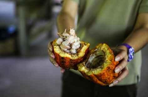 Une cabosse de cacao - Costa Rica -