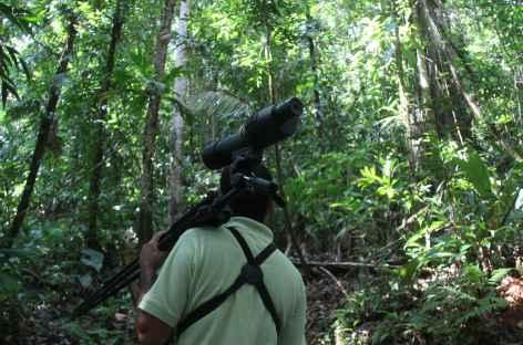 Balade dans le parc national Corcovado - Costa Rica -