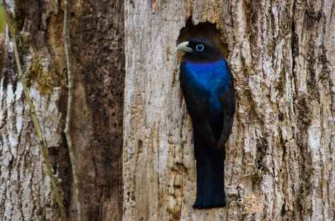 Observation des oiseaux - Costa Rica -