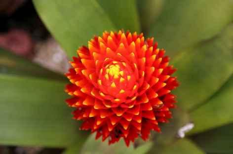 Beauté des fleurs tropicales - Costa Rica -