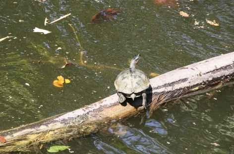 Tortue à Cahuita - Costa Rica -