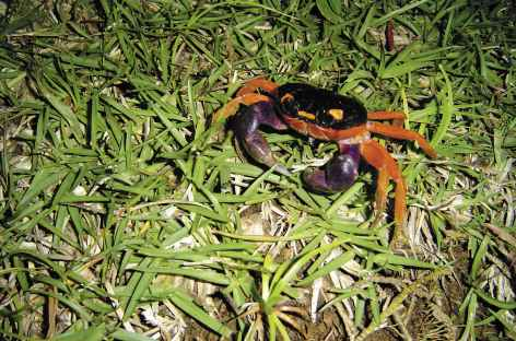 Crabe - Costa Rica -