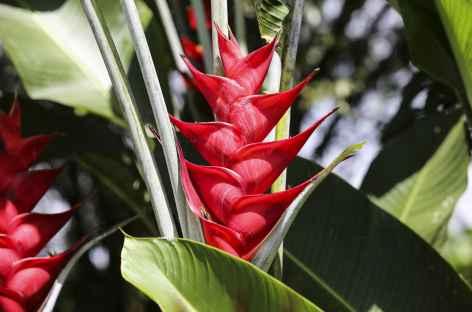 Flore - Costa Rica -