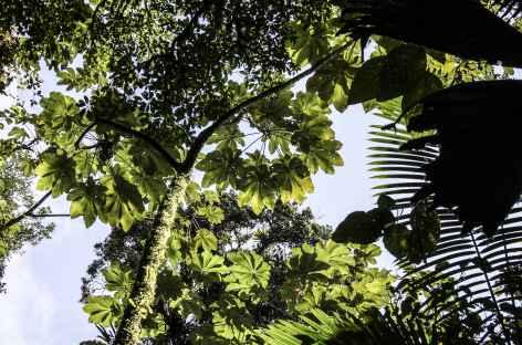 Beauté de la forêt tropicale - Costa Rica -