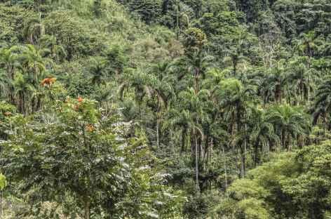 Trek vers La Chaqueta - Costa Rica -