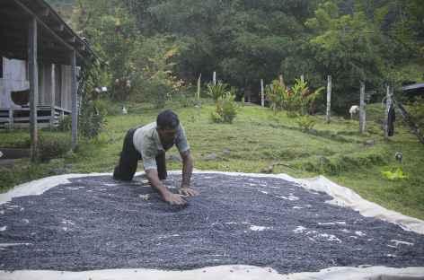 Le café est mis à sécher à Piedras Blancas - Costa Rica -