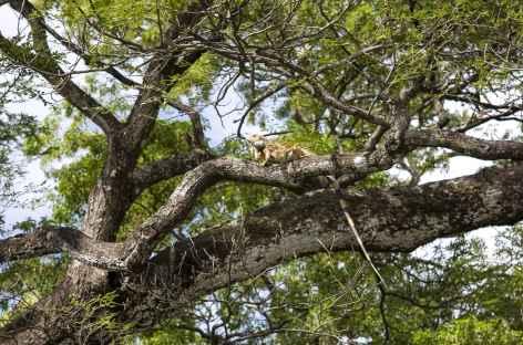 Un iguane terrestre au bord du rio Bebedero - Costa Rica -