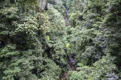La forêt tropicale près du volcan Arenal - Costa Rica -
