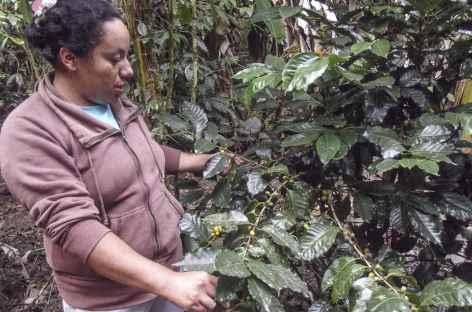 Intag, visite d'un producteur de café - Equateur -