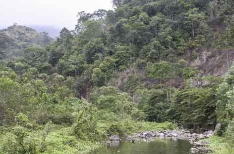 Balade dans la forêt d'Ayampe - Equateur -