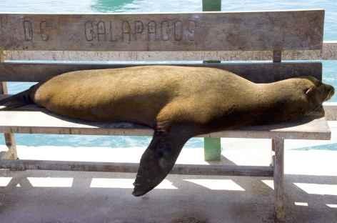 Archipel des Galapagos, une otarie - Equateur -
