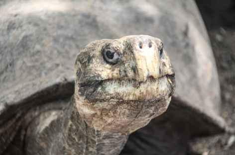 Les fameuses tortues des Galapagos - Equateur -