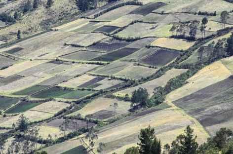 Champs en damier dans la campagne équatorienne - Equateur -