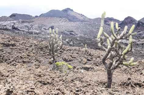 Archipel des Galapagos, balade vers le volcan Chico (île Isabela) - Equateur -