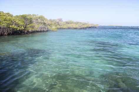 Archipel des Galapagos, le site Concha y Perla (île Isabela) - Equateur -