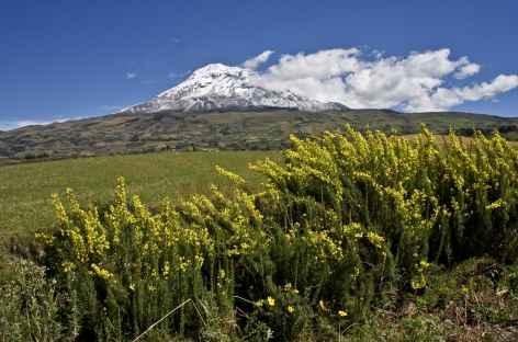 Le Chimborazo - Equateur -