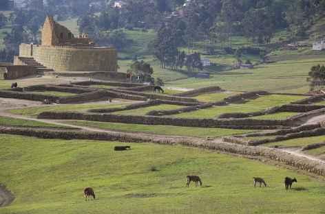 Le site Inca d'Ingapirca - Equateur -