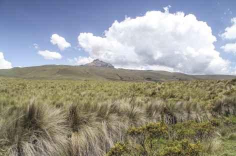 Vue sur le Sincholagua depuis Pedregal - Equateur -